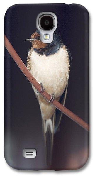 Hirundo Rustica Galaxy S4 Cases - Barn Swallow Galaxy S4 Case by Ronald Jansen