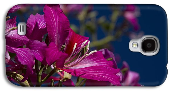 Bauhinia Purpurea - Hawaiian Orchid Tree Galaxy S4 Case by Sharon Mau