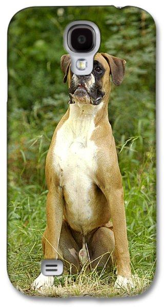 Boxer Galaxy S4 Cases - Boxer Dog Galaxy S4 Case by Jean-Michel Labat