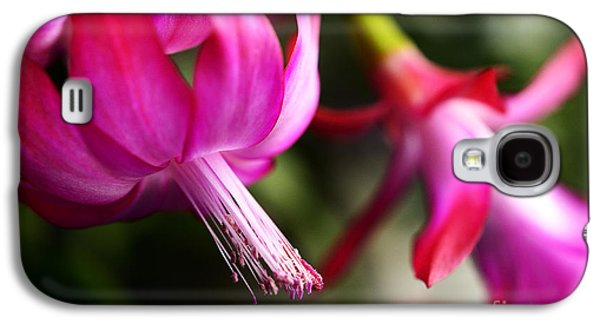 Epiphyte Galaxy S4 Cases - Christmas Cactus in Bloom Galaxy S4 Case by Thomas R Fletcher