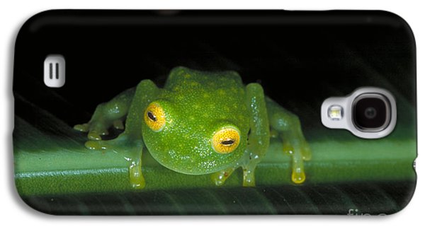 Anurans Galaxy S4 Cases - Fleischmanns Glass Frog Galaxy S4 Case by Gregory G. Dimijian