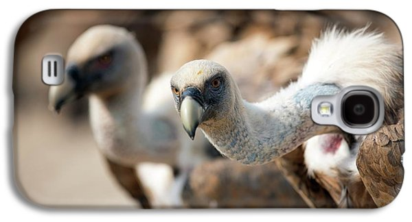 Griffon Vultures Galaxy S4 Case by Nicolas Reusens