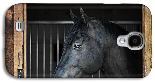 Quarter Horses Galaxy S4 Cases - Horse in stable Galaxy S4 Case by Elena Elisseeva