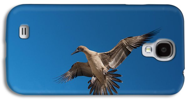 Red-footed Booby (sula Sula Websteri Galaxy S4 Case by Pete Oxford
