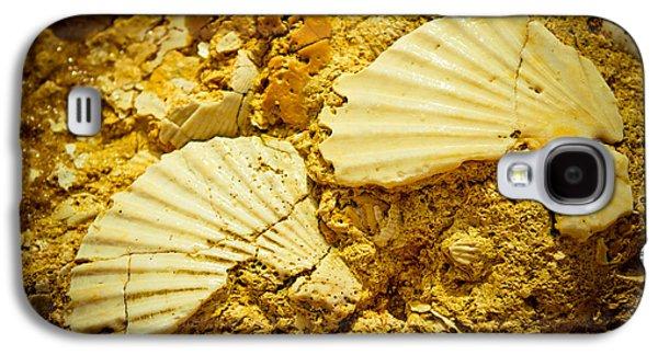 Biology Pyrography Galaxy S4 Cases - Seashell in stone Galaxy S4 Case by Raimond Klavins