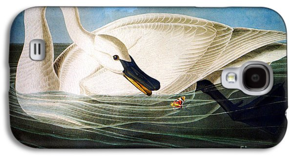 Wild Life Drawings Galaxy S4 Cases - Trumpeter Swan Galaxy S4 Case by John James Audubon