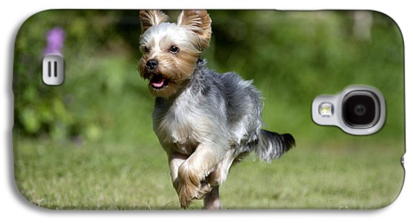 Dog Running. Galaxy S4 Cases - Yorkshire Terrier Dog Galaxy S4 Case by John Daniels