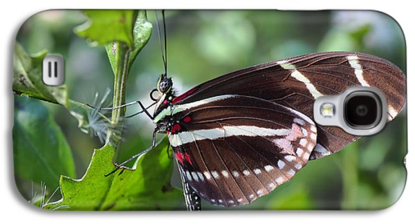Florida Flowers Galaxy S4 Cases - Zebra Longwing Butterfly Galaxy S4 Case by Rudy Umans