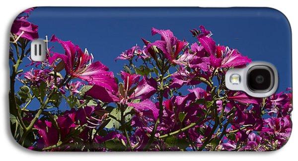 Pinks And Purple Petals Photographs Galaxy S4 Cases - Bauhinia Purpurea - Hawaiian Orchid Tree Galaxy S4 Case by Sharon Mau