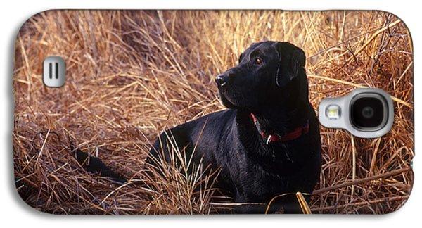 Domesticated Animals Galaxy S4 Cases - Black Labrador Retriever Galaxy S4 Case by William H. Mullins