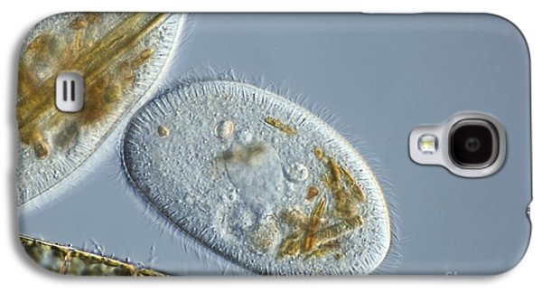 Single Cell Galaxy S4 Cases - Frontonia Protozoa, Light Micrograph Galaxy S4 Case by Frank Fox
