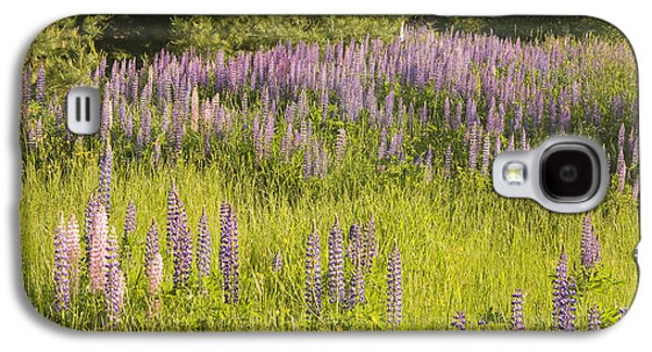 Maine Meadow Galaxy S4 Cases - Maine Wild Lupine Flowers Galaxy S4 Case by Keith Webber Jr