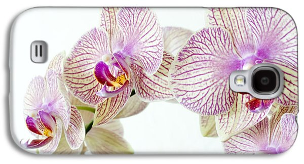 Phalaenopsis Orchid Phalaenopsis Sp Galaxy S4 Case by Lawrence Lawry