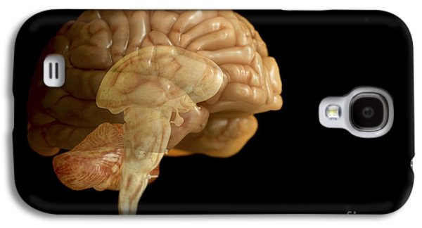 Internal Organs Galaxy S4 Cases - The Human Brain Galaxy S4 Case by Science Picture Co