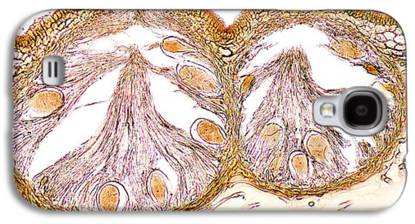 Alga Galaxy S4 Cases - Bladder Wrack, Light Micrograph Galaxy S4 Case by Dr. Keith Wheeler