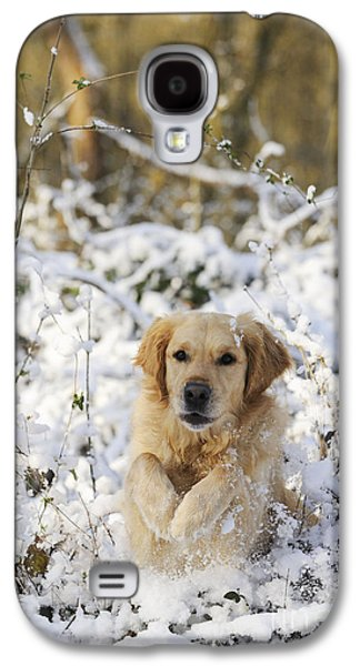 Dog Running. Galaxy S4 Cases - Golden Retriever In Snow Galaxy S4 Case by John Daniels
