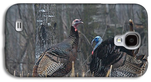 Young Turkey Galaxy S4 Cases - Jake Eastern Wild Turkeys Galaxy S4 Case by Linda Freshwaters Arndt