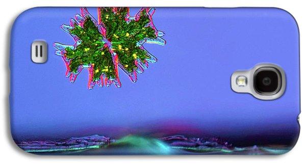 Micrasterias Desmid Galaxy S4 Case by Marek Mis