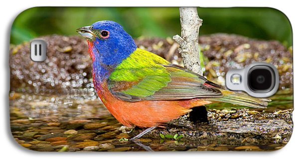 Painted Bunting Galaxy S4 Case by Anthony Mercieca