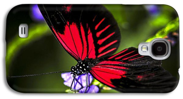 Pollinate Galaxy S4 Cases - Red heliconius dora butterfly Galaxy S4 Case by Elena Elisseeva
