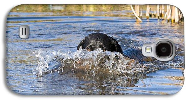 Water Retrieve Galaxy S4 Cases - Black Labrador Retriever Galaxy S4 Case by William H. Mullins