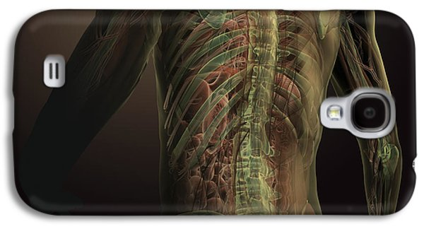 Internal Organs Galaxy S4 Cases - Human Anatomy Galaxy S4 Case by Science Picture Co