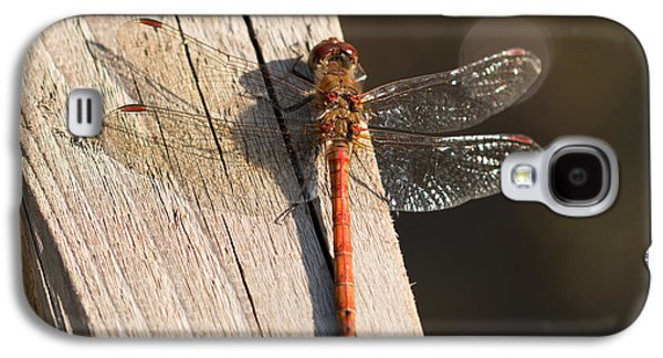 Macro Photographs Galaxy S4 Cases - Common Darter Dragonfly Galaxy S4 Case by Robert Carr