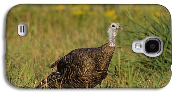Meleagris Galaxy S4 Cases - Eastern Wild Turkey Galaxy S4 Case by Linda Freshwaters Arndt