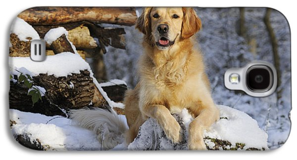 Dogs In Snow. Galaxy S4 Cases - Golden Retriever In Snow Galaxy S4 Case by John Daniels