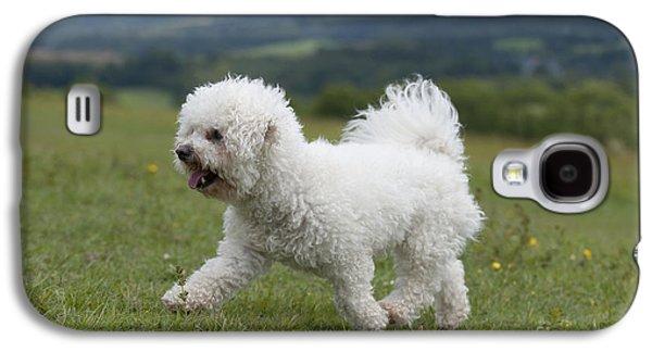 Dog Trots Galaxy S4 Cases - Bichon Frise Galaxy S4 Case by John Daniels