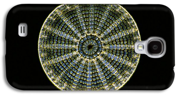 Striae Galaxy S4 Cases - Fossil Diatom, Light Micrograph Galaxy S4 Case by Frank Fox