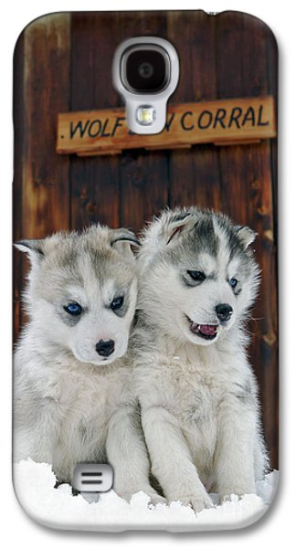 Dogs In Snow. Galaxy S4 Cases - Siberian Husky Puppies Galaxy S4 Case by Rolf Kopfle