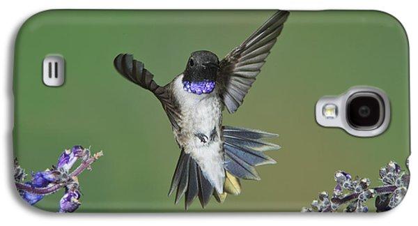 Chin Up Galaxy S4 Cases - Black-chinned Hummingbird Galaxy S4 Case by Anthony Mercieca
