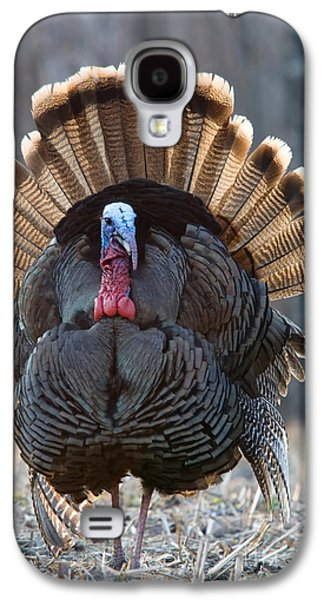 Young Turkey Galaxy S4 Cases - Jake Eastern Wild Turkey Galaxy S4 Case by Linda Freshwaters Arndt