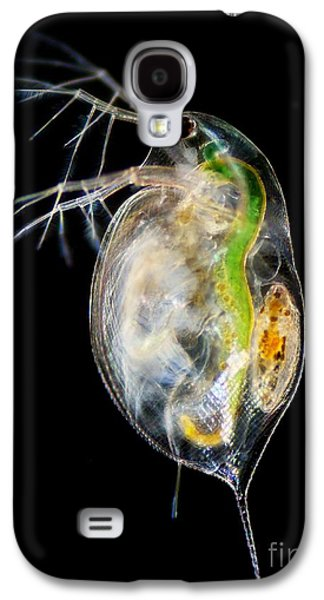 Plankton Galaxy S4 Cases - Water Flea Galaxy S4 Case by Laguna Design