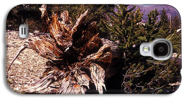 Tree Roots Galaxy S4 Cases - A Fallen Ancient Galaxy S4 Case by Paul W Faust -  Impressions of Light