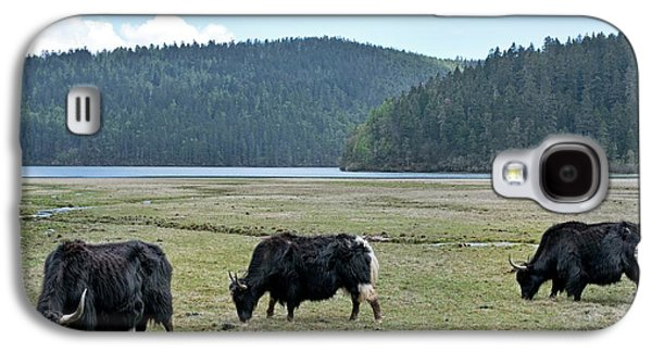 A Herd Of Yaks In Potatso National Park Galaxy S4 Case by Tony Camacho