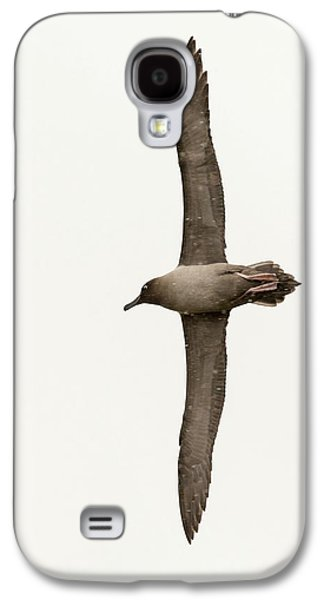 A Light Mantled Albatross Galaxy S4 Case by Ashley Cooper