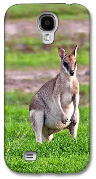 A Male Grey Kangaroos (macropus Galaxy S4 Case by Miva Stock
