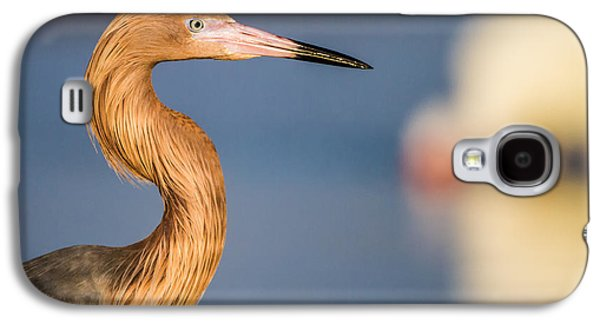 Outdoors Galaxy S4 Cases - A reddish Egret Profile Galaxy S4 Case by Andres Leon
