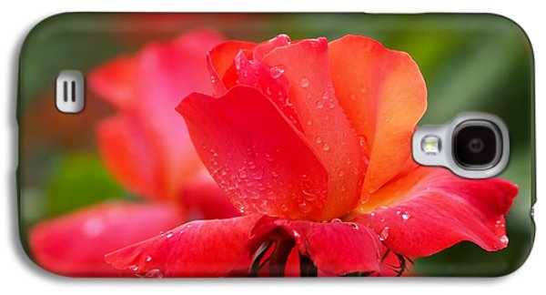 Red Flowers Galaxy S4 Cases - A Tintinara Rose in the Rain Galaxy S4 Case by Rona Black