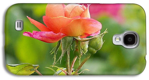Garden Art Galaxy S4 Cases - A Young Benjamin Britten Rose Galaxy S4 Case by Rona Black