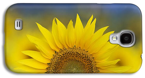 Sun Galaxy S4 Cases - Abstract Sunflower Panoramic  Galaxy S4 Case by Tim Gainey