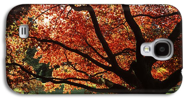 Garden Scene Galaxy S4 Cases - Acer Tree In A Garden, Thorp Perrow Galaxy S4 Case by Panoramic Images