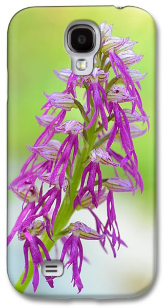 Floral Ceramics Galaxy S4 Cases - Aceras anthropophora x Orchis italica Galaxy S4 Case by Orazio Puccio