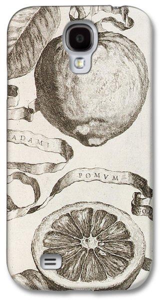 Flora Drawings Galaxy S4 Cases - Adams Apple Galaxy S4 Case by Cornelis Bloemaert