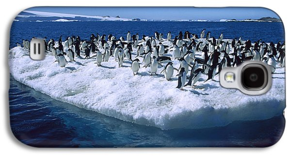 Adelie Penguins On Icefloe Antarctica Galaxy S4 Case by Colin Monteath