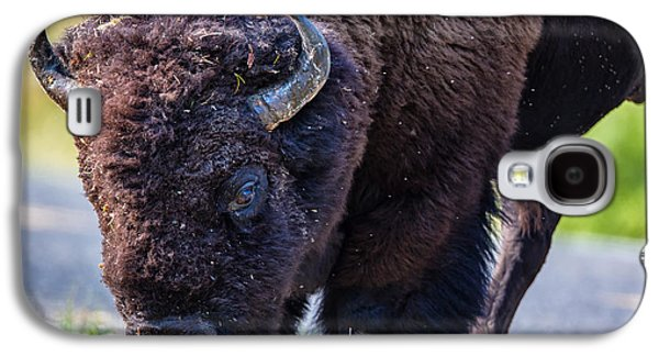 American Galaxy S4 Cases - Adult Bison Staring Galaxy S4 Case by Andres Leon