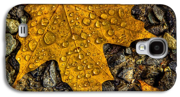 Autumn Leaf On Water Galaxy S4 Cases - After an Autumn Rain Galaxy S4 Case by David Patterson