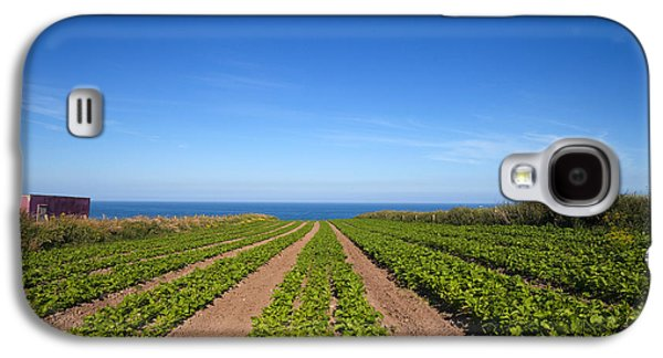 Farmscape Galaxy S4 Cases - Agriculture, Ardmore Head, Waterford Galaxy S4 Case by Panoramic Images